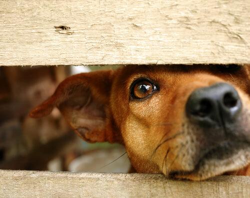 Cómo recuperar la confianza después de sufrir un maltrato animal