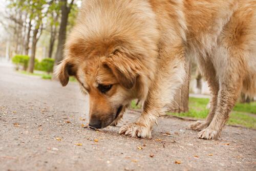 evitar que el perro coma en la calle