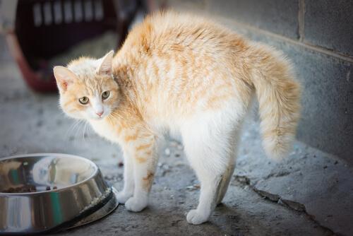 5 causas de fobias en los gatos