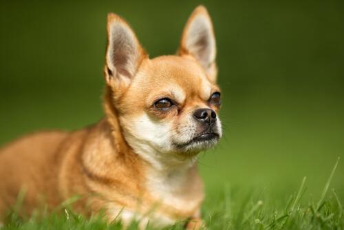 Cosas que producen gases en los perros