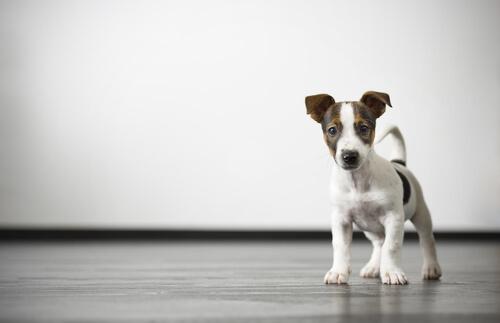 gases en los perros