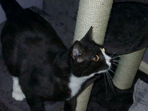 Una gata desaparecida en Londres aparece en París 8 años después