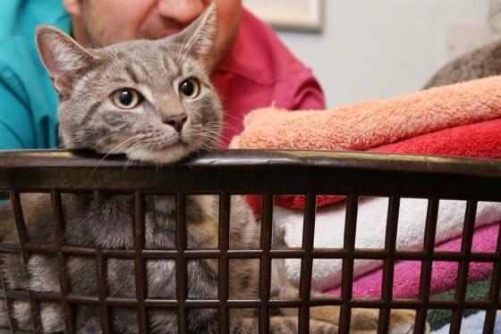 gato que sobrevivio a la lavadora 3