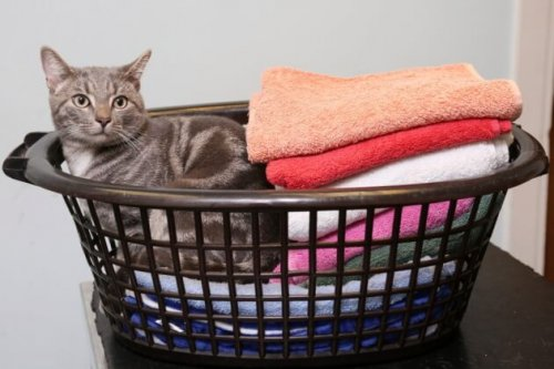 Un gato que sobrevivió a un ciclo de 60 grados de lavadora