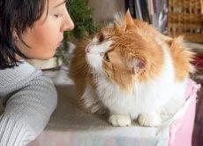 gato sociable