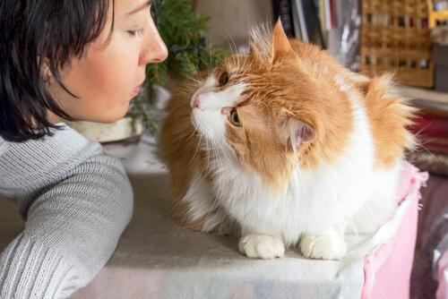 Con estos tips lograrás que tu gato sea más sociable