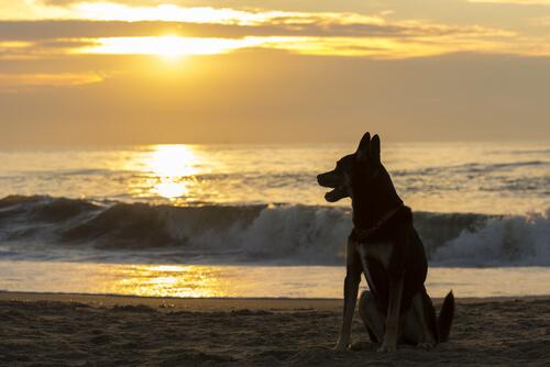 ¿Cuánto tiempo debes esperar después de la muerte de tu mascota para traer a casa a un nuevo animal?