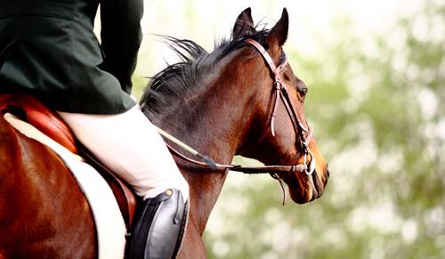 los animales en los juegos olimpicos
