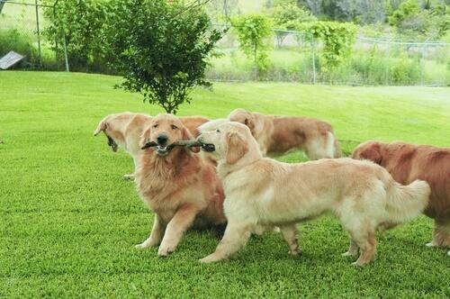 Por qué los perros se huelen unos a otros
