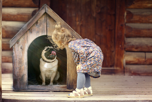 maltratar a un perro inconscientemente. Casa de perro pequeña