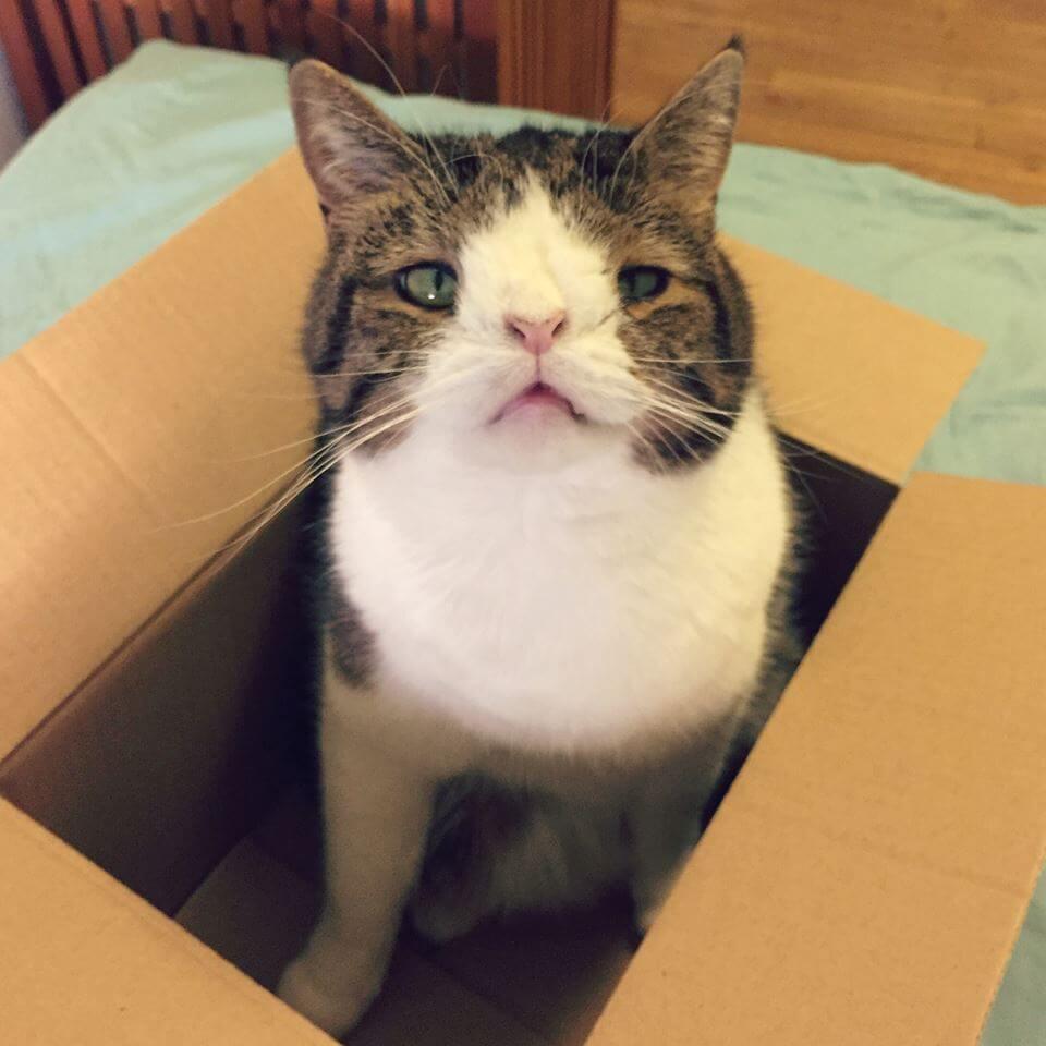 monty, un gato con sindrome de down 2