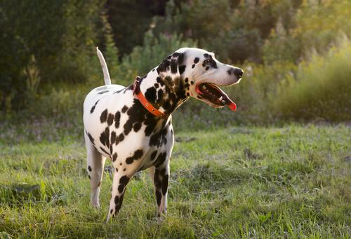 movimientos de la cola del perro