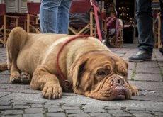 nocion del tiempo en los perros