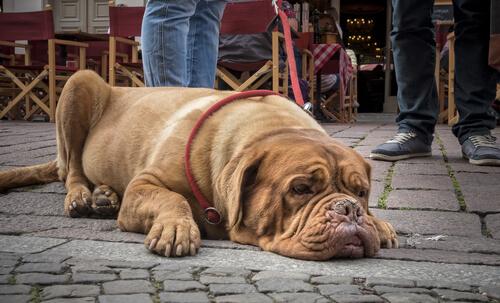 La noción del tiempo en los perros