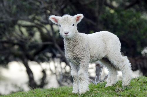 Ropa vegana, textiles que velan por el bien de los animales