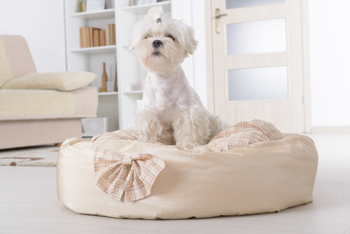 White long-haired doy sitting in a dog bed