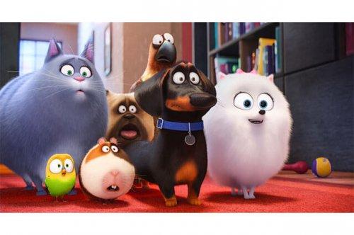 Mascotas una increíble película animada mis animales