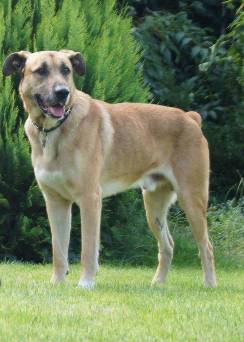 perro callejero adoptado por una azafata 3