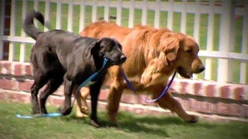 La tierna historia del perro ciego salvado por su perro guía