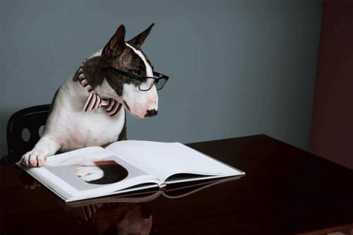 Neville, el perro de Marc Jacobs, se convierte en un escritor