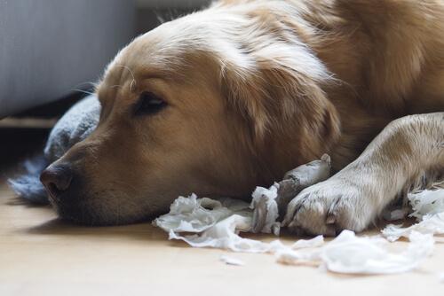 5consejos para que tu perro no sea un destructor