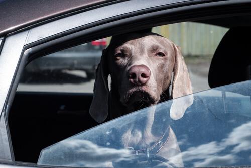 Accesorios auto y viaje para perros | Best for Pets