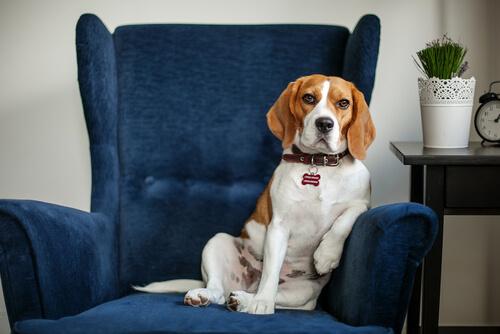 perro en el psicologo