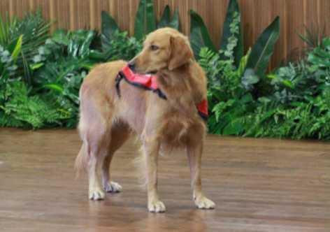 Happy, un perro que calma a los niños que van a una audiencia