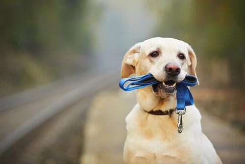 perro usando collar