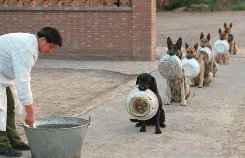 16 perros  esperan su turno para comer