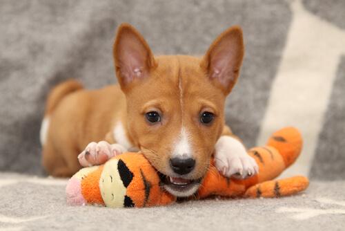 ¿Los perros necesitan Prozac?