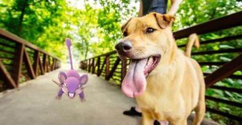 ¿Cómo el juego Pokemon Go salvó la vida de un perro anciano?