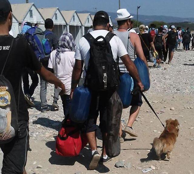 refugiados sirios con sus mascotas 2