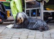 restaurante para perros