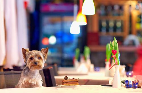 Restaurantes donde pueden comer solo perros