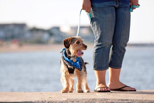 sacar de paseo a tu perro
