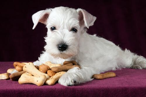 Snacks saludables para tu perro