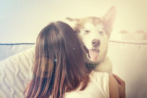 No intentes sobreproteger a tu perro