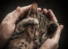 socializar a un gato