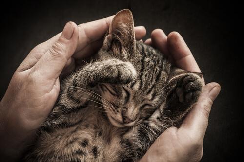 socializar com um gato