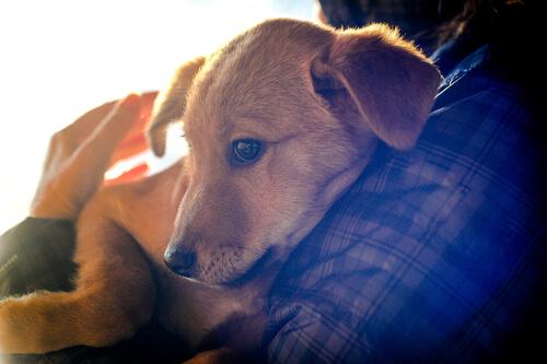 terapia para presos con perros