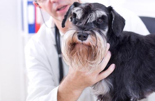 unidad movil veterinaria