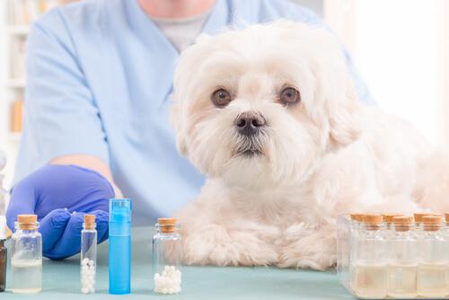 5 aceites naturales que deben estar en botiquín de tu perro