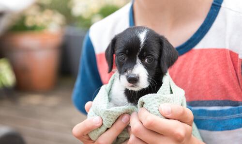 Cachorro en las manos de un niño