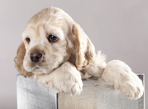 Cachorro de perro en una caja
