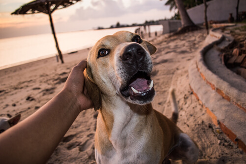 Dog being petted on the beach