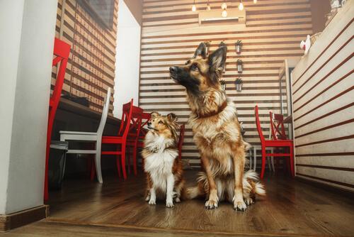 cafetería para adoptar un perro