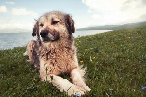 7 causas de problemas de comportamiento en perros
