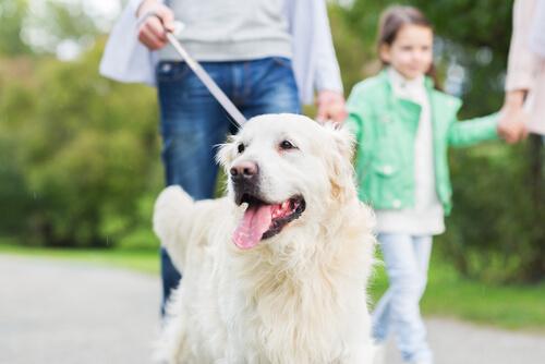 10 cosas que tu perro hace por ti