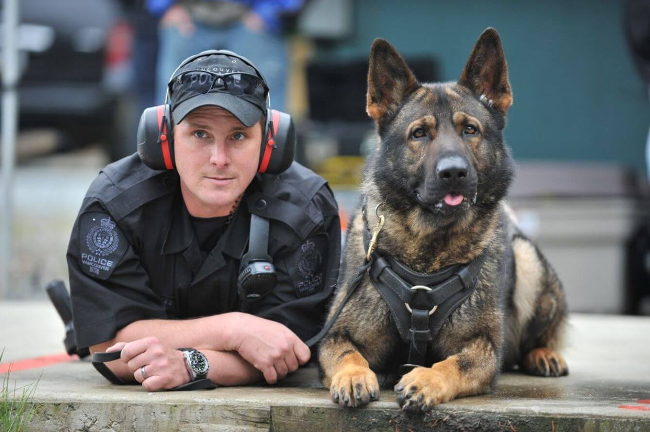 Policeman training with a German Shepherd police dog